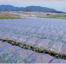 農ビ透明 厚み0.1ミリX幅1.85mX長さ100m