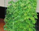 サイドロープ付 緑のカーテンネット 2.7m×5m