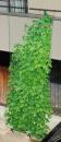 緑のカーテン 5m吊下げワイド800