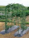 菜園つる棚セット 80×180cm