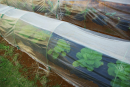 虫よけ保温カバー支柱付 1.8×5m 実物大型野菜用