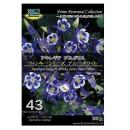 【43】 アキレギア ブルガリス ウィンキーシリーズ ブルーホワイト