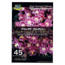 【45】 アキレギア ブルガリス ウィンキーシリーズ ローズローズ