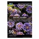 【50】 アキレギア ブルガリス ウィンキーシリーズ ダブルブルーホワイト
