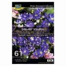 【61】 アキレギア ブルガリス クレメンタインシリーズ ブルー