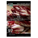 【97】 チコリ ロッサディ TV