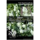 【209】 アルセア チェイターズ ホワイト