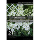 【211】 デルフィニューム パシフィックプレミアム ガラハッド