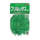 フリルレタス (緑) フリンジーグリーン
